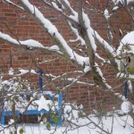 Winter im Gartenidyll